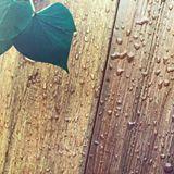 係天台見到唔想見既野? Fence Wall幫到你!